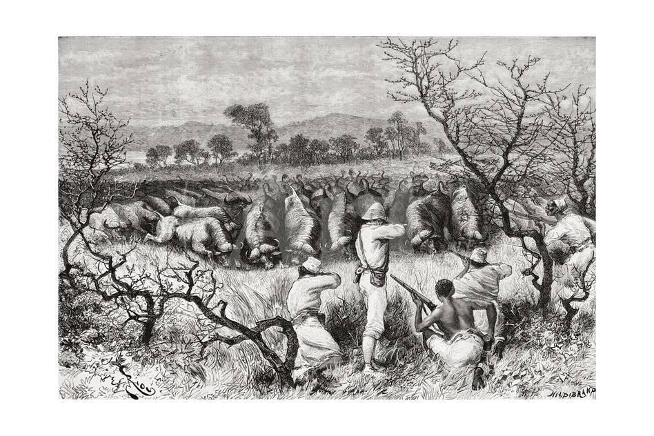 Hunting Buffalo in Central Africa in the Late 19th Century, from ...