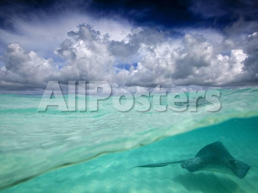 Caribbean Sea Cayman Islands on nassau caribbean, saint-martin caribbean, belize caribbean, cooper island caribbean, caicos caribbean, pennsylvania caribbean, windward islands caribbean, el salvador caribbean, eustatius caribbean, union island caribbean, monaco caribbean, anegada caribbean, virgin islands caribbean, guam caribbean, dominica island caribbean, jamaica caribbean, peter island caribbean, guatemala caribbean, chile caribbean, st barts caribbean,
