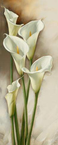 Callas Gracieux I Art Print