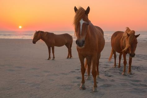 Assateague Island Wild Horses Photographic Print