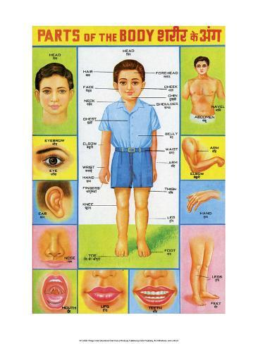 Indian Educational Chart - Parts of the Body Stampa artistica