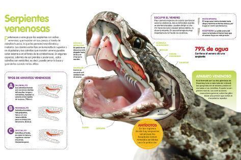 Infografía De Las Serpientes Venenosas: Su Manera De Inyectar Veneno ...