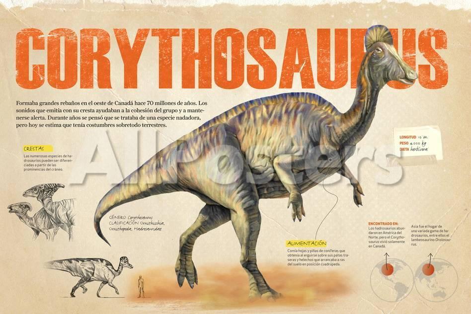 Infografía Del Coritosaurio, Dinosaurio Herbívoro Del Cretácico ...