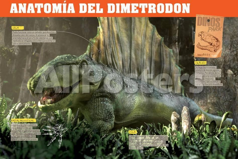 Infografía Del Dimetrodon, Depredador Del Pérmico (Era Paleozoica ...