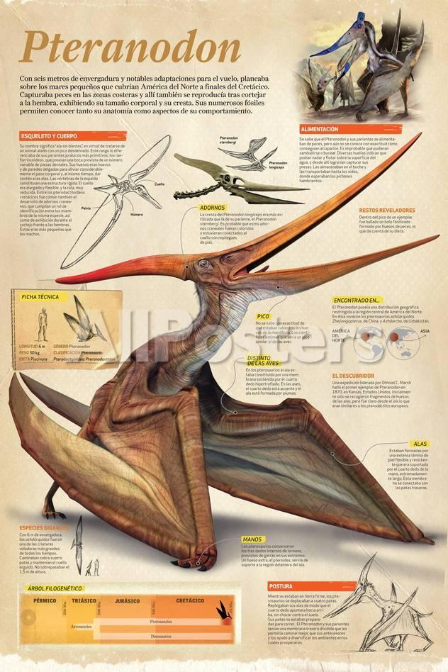 Infografía Del Pteranodon, Dinosaurio Que Planeaba Sobre Los Mares a ...