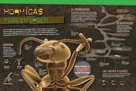 Infografía Sobre Las Hormigas: Anatomía, Castas, Defensa Y ...