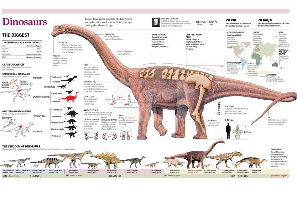 Infographic Of The Anatomy Of Argentinosaurus And Classification And