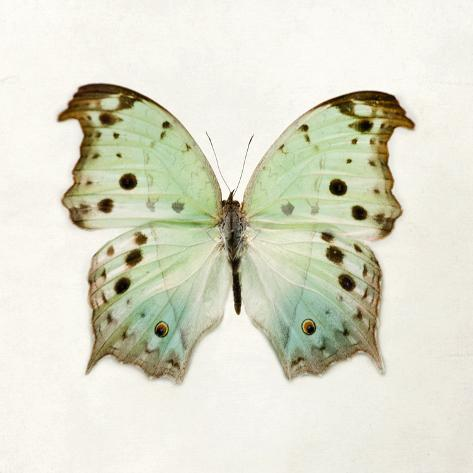 Butterfly Impression Giclee Print