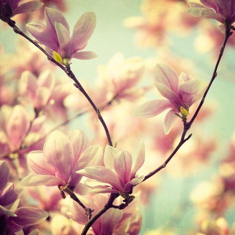 Magnolia Bloom I Giclee Print