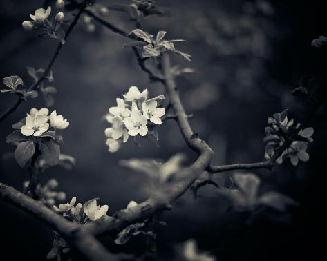 Midnight Garden I Giclee Print