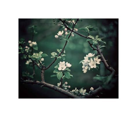 The Midnight Garden I Art Print