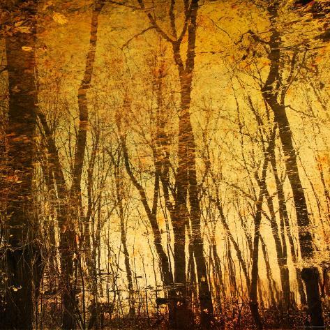 Tree Reflections Photographic Print