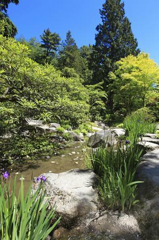 Japanese Garden in Seattle Photographic Print