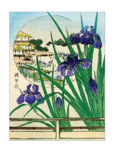 Irises Round Painting Stampa artistica