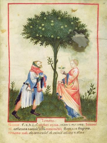 Nouv Acq Lat 1673 Fol.18 Harvesting Lemons, from 'Tacuinum Sanitatis', C.1390-1400 Giclée-vedos