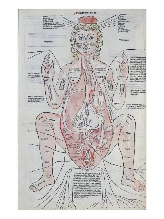 The Anatomy of the Pregnant Woman, Illustration from \'Fasciculus ...