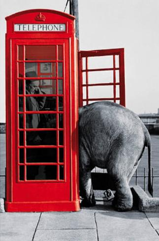 Its for You (Elephant in Phone Booth) Art Poster Print Poster