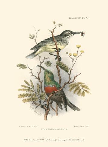 Birds in Nature I Art Print