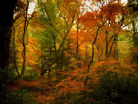 Deep Woods Photographic Print