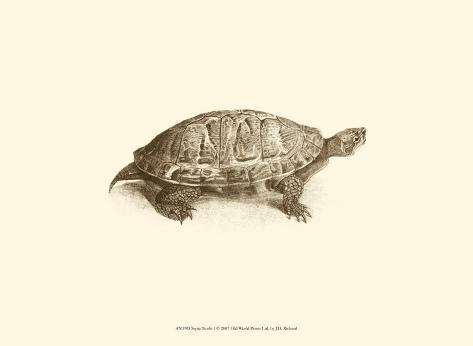 Sepia Turtle I Art Print