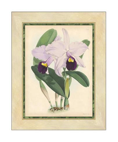 Fitch Orchid IV Giclee Print
