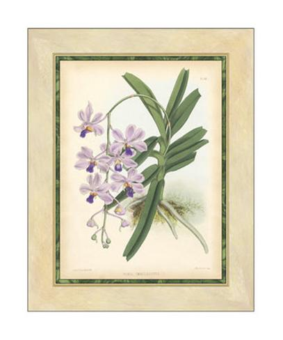 Fitch Orchid V Giclee Print