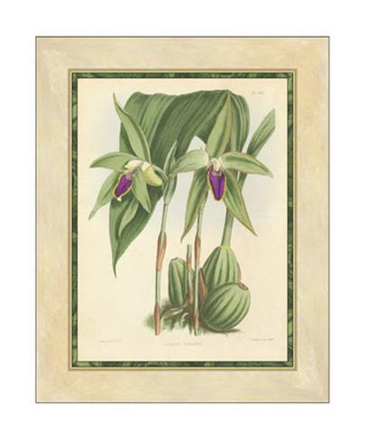 Fitch Orchid VI Giclee Print