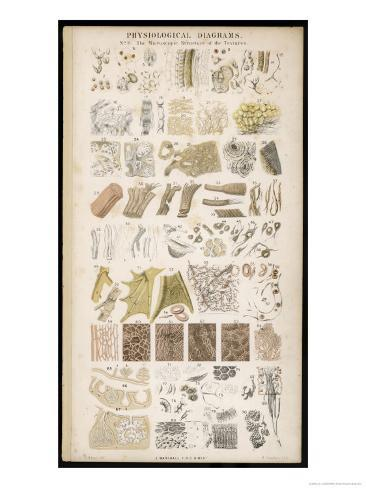 Microscopic Structure of the Texture of Various Parts of the Body Giclee Print