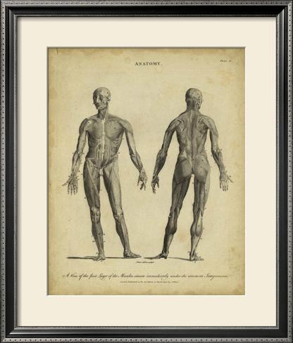Anatomy Study IV Framed Art Print