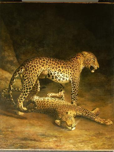 Two Leopards Lying in the Exeter Exchange, 1808 Impressão giclée