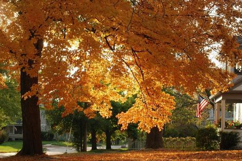 A Huge Orange Maple Tree in a Front Yard Photographic Print