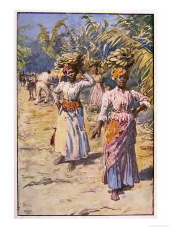 Jamaican Banana Plantation Giclee Print At Allposters Com