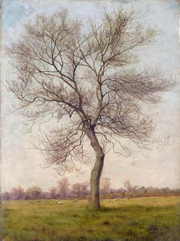 Study of an Ash Tree in Winter, 1883 Giclee Print