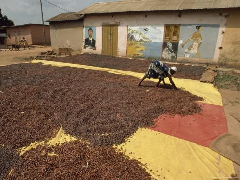 Awoman Bends to Spread Brown Cacao Beans on a Red-And- Yellow Tarp to Dry in the Sun Photographic Print