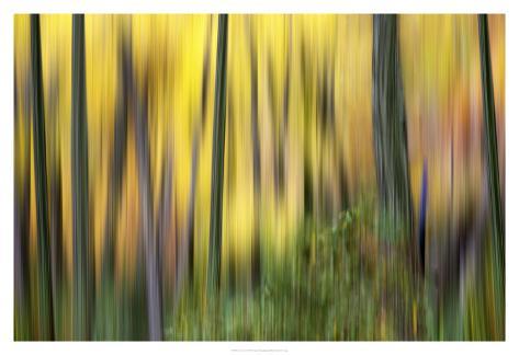 Forest Run II Taidevedos