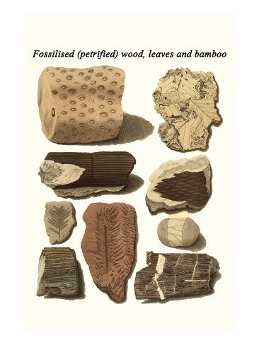 Fossilised (Petrified) Wood, Leaves and Bamboo Stampa artistica