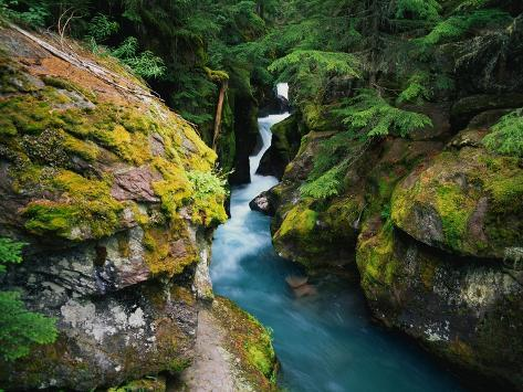Avalanche Creek Photographic Print
