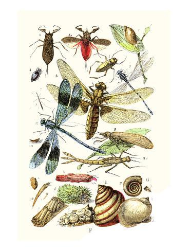 Water Scorpion, Water Boatman, Dragonfly Art Print