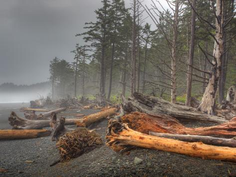 Beached Trees From Ocean Storms, Rialto Beach, Olympic National Park, Washington, USA Photographic Print