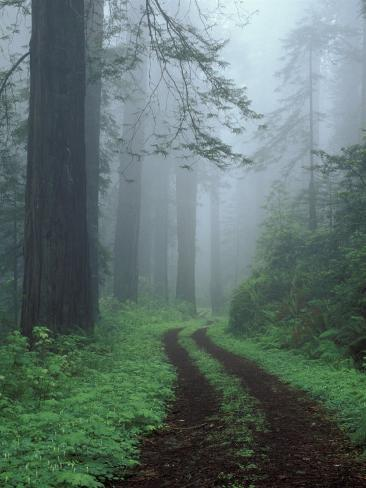 Coast Trail, Old Highway 101 with Coast Redwoods, Del Norte Coast State Park, California, USA Photographic Print