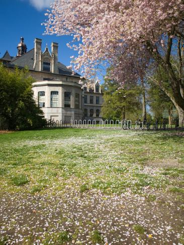 Denny Hall with Blooming Cherry Trees, University of Washington, Seattle, Washington, USA Photographic Print