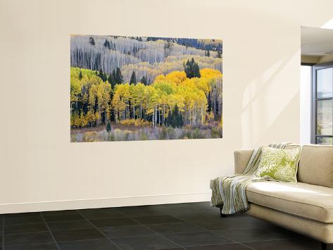 Gunnison National Forest, Colorado, USA Wall Mural
