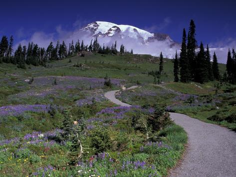 Mt. Rainier from Dead Horse Creek Trail, Mt. Rainier National Park, Washington, USA Photographic Print