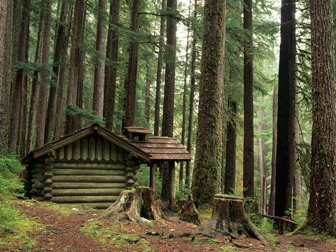 Rainforest and Sol Duc Shelter, Sol Duc Valley, Olympic National Park, Washington, USA Photographic Print