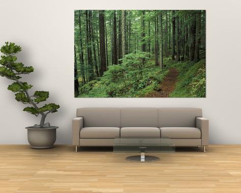 Silver Falls Trail, Mt. Rainier National Park, Washington, USA Giant Art Print