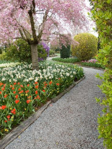 Tulip and Daffodil Garden at Tulip Festival, Skagit Valley ...