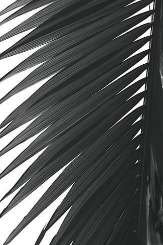 Palms, no. 7 Stretched Canvas Print