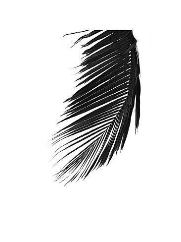 Palms, no. 8 Giclee Print