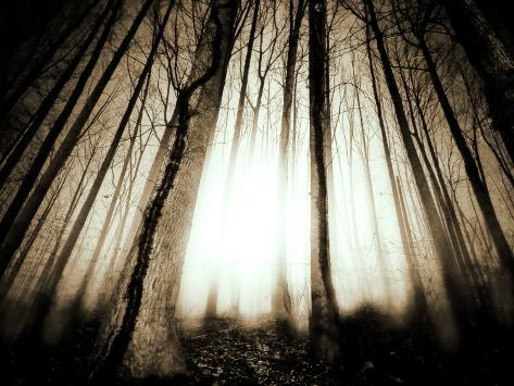 Sunlight Shining through Dense Forest Photographic Print