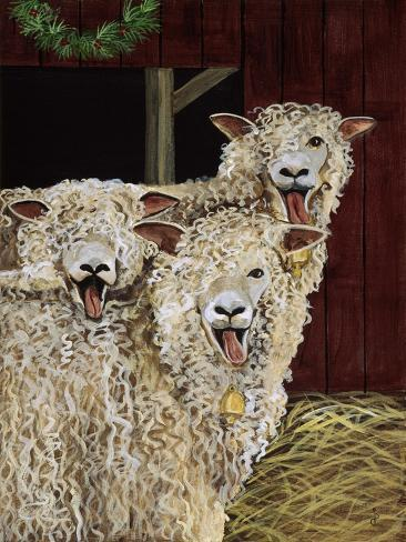 3 Sheep with their Tongues Hanging Out and the Curly Wool Hanging over their Left Eye Giclee Print